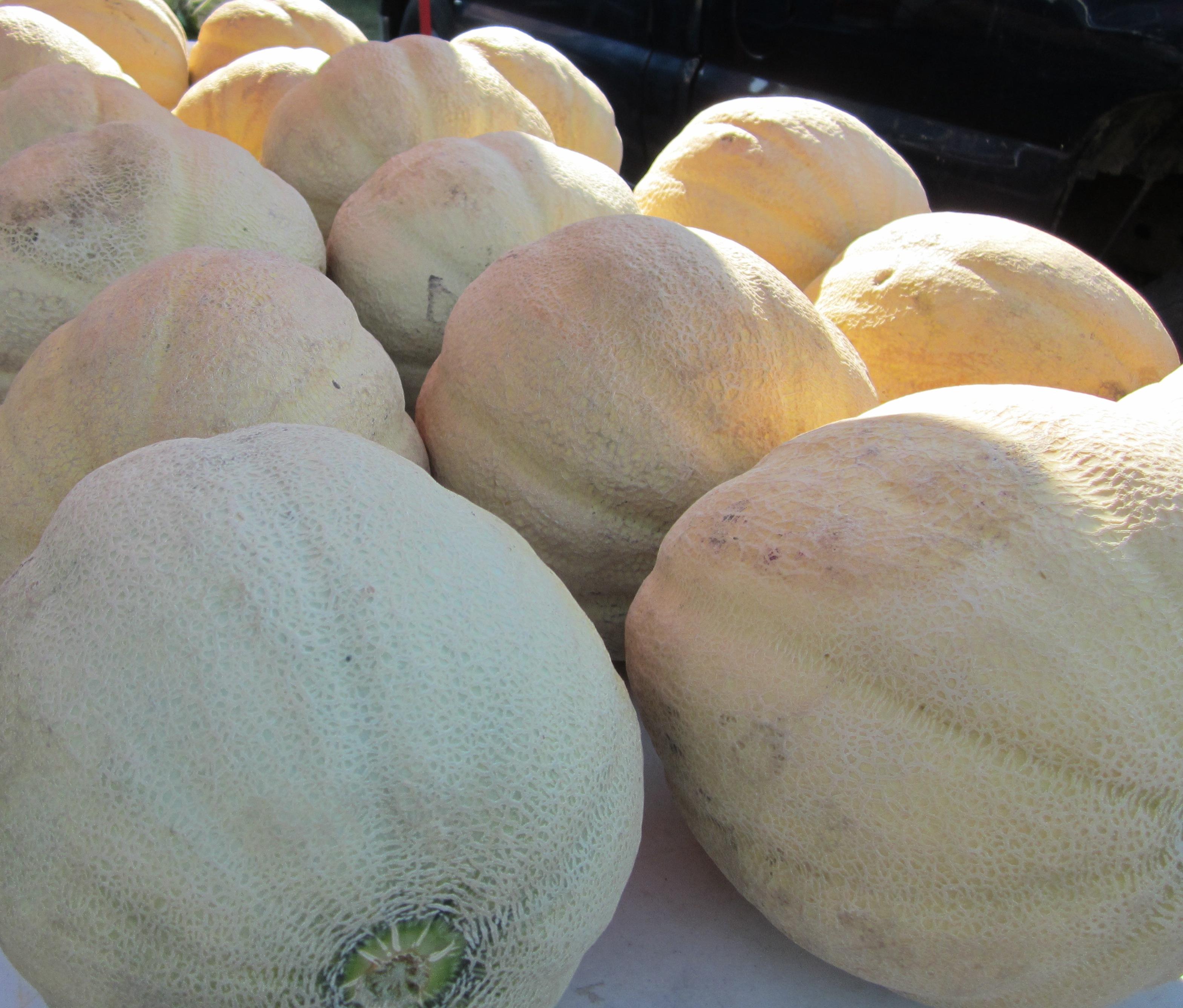 Farmers Market Melon